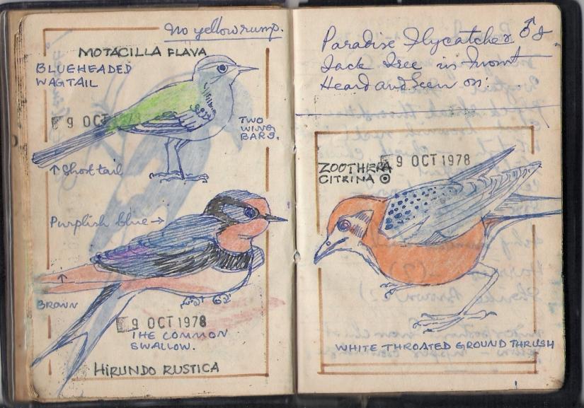 From the Notebooks of a Birdwatcher